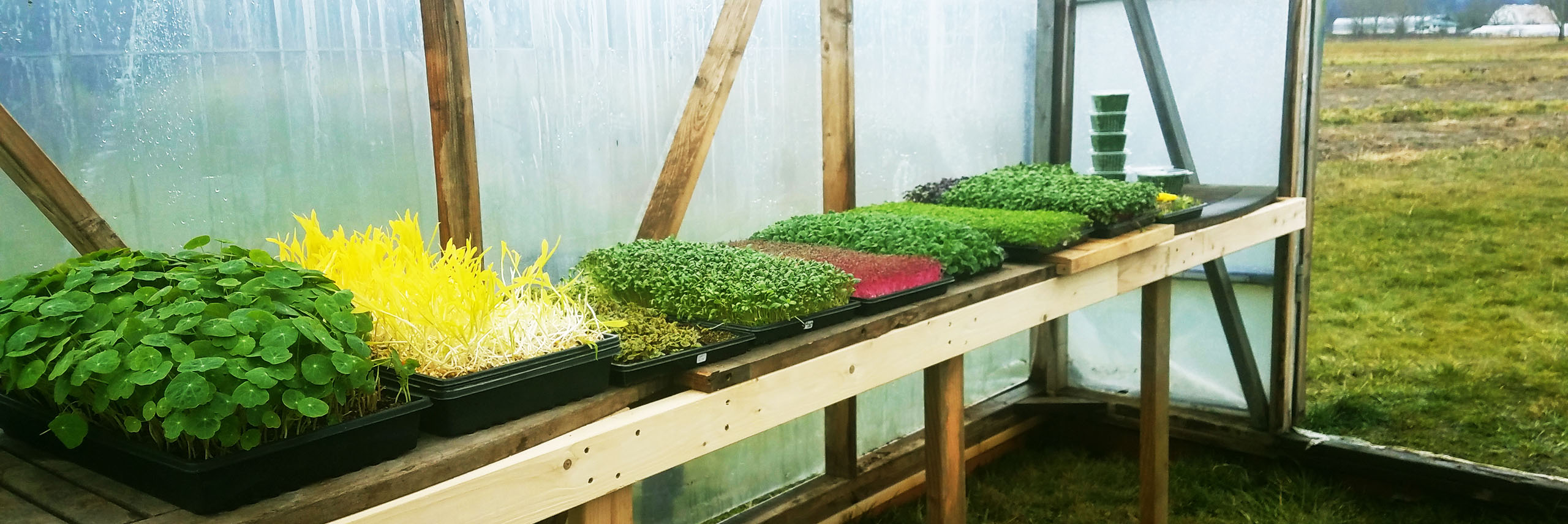Microgreen display