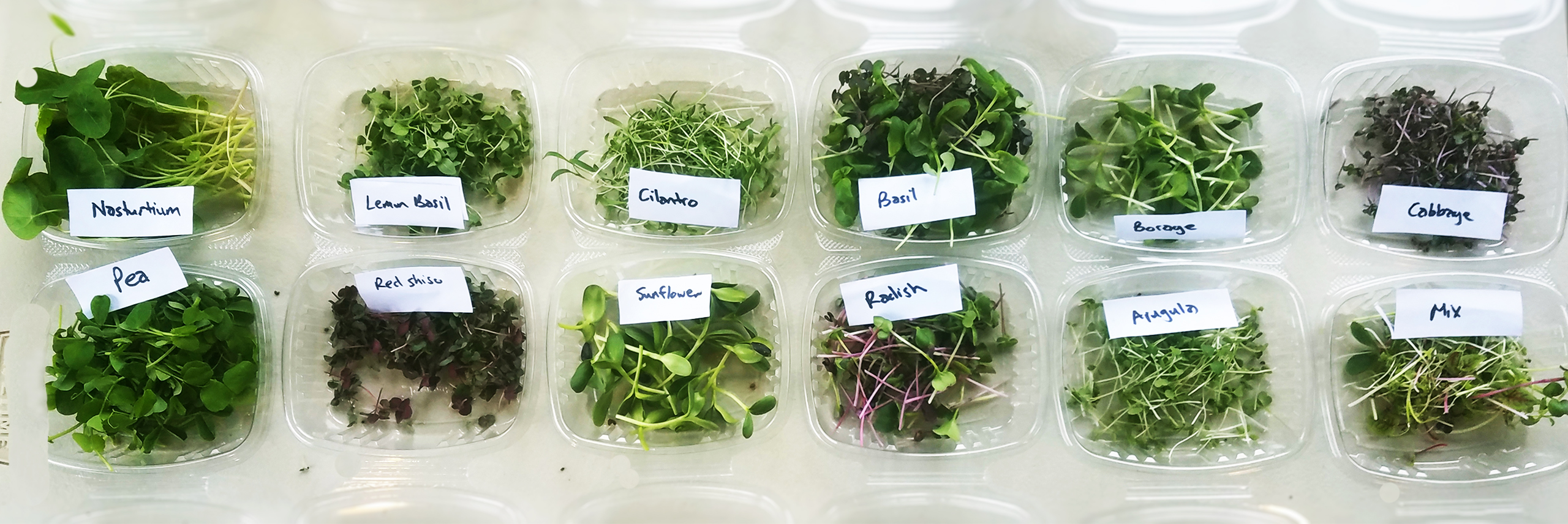 microgreen packages