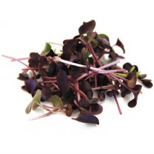 Micro sango radish