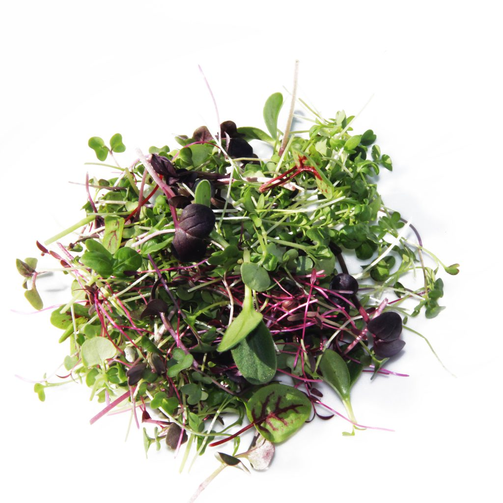 Microgreen spicy mix