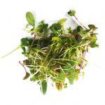 Microgreen mild mix