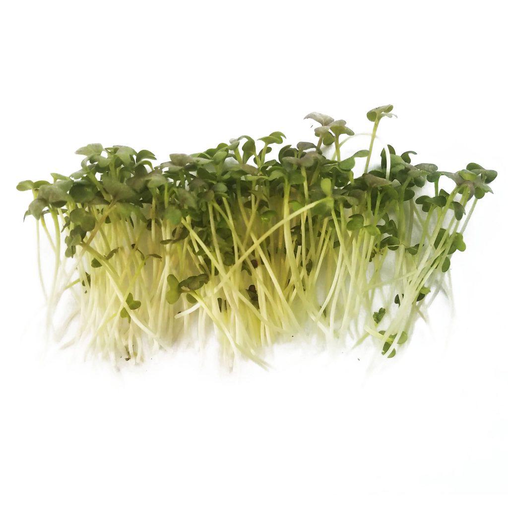 Mustard microgreen