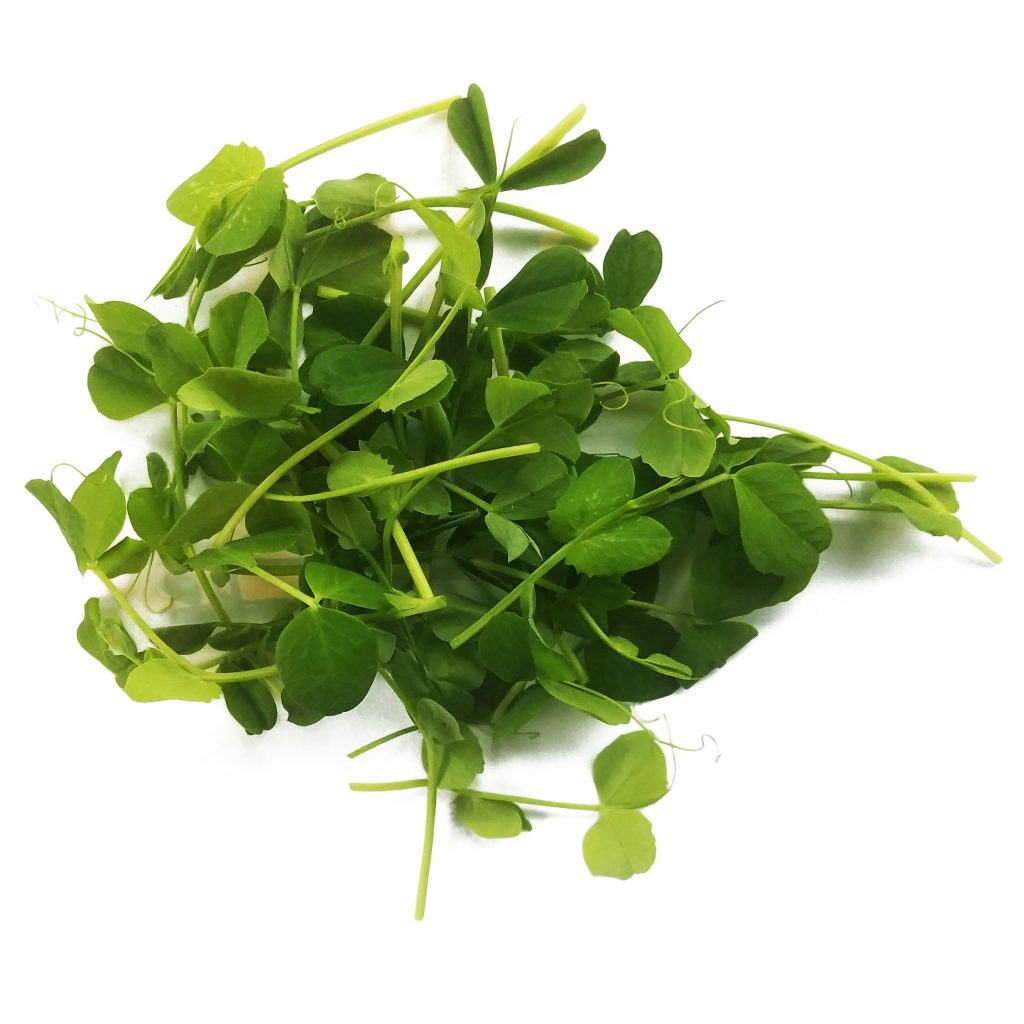 Pea shoot