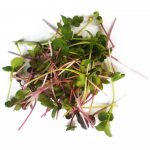 Micro radish