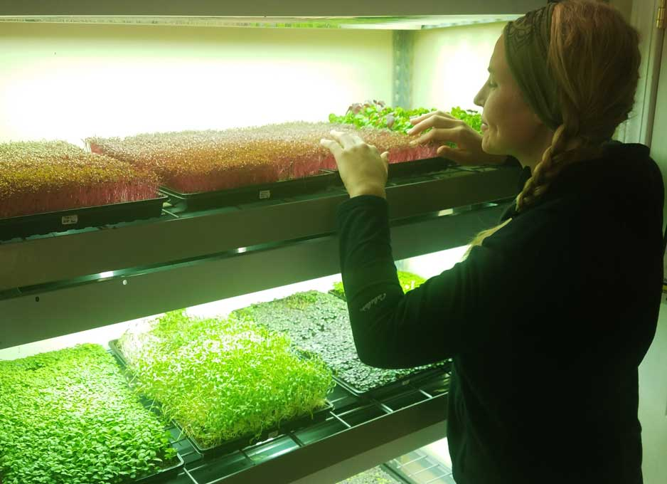 Caring for microgreens