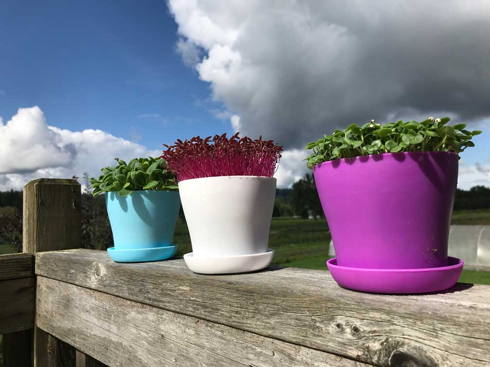 microgreen growing pots