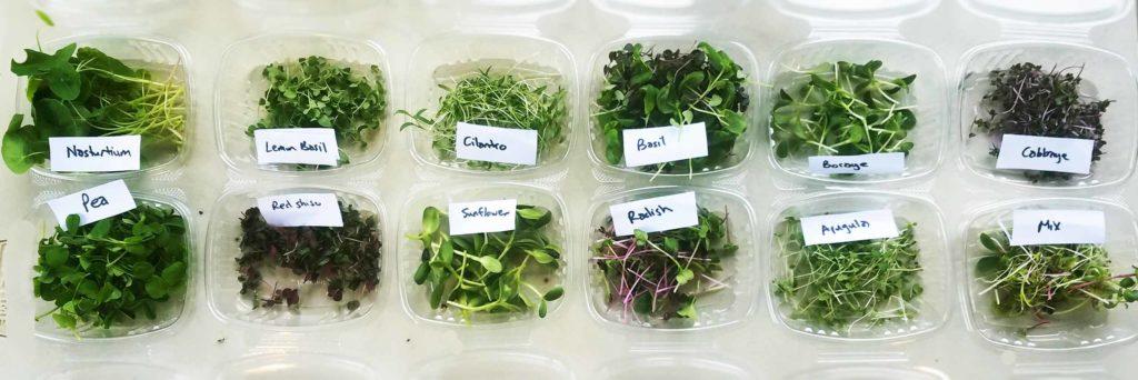 packaged microgreen varieties