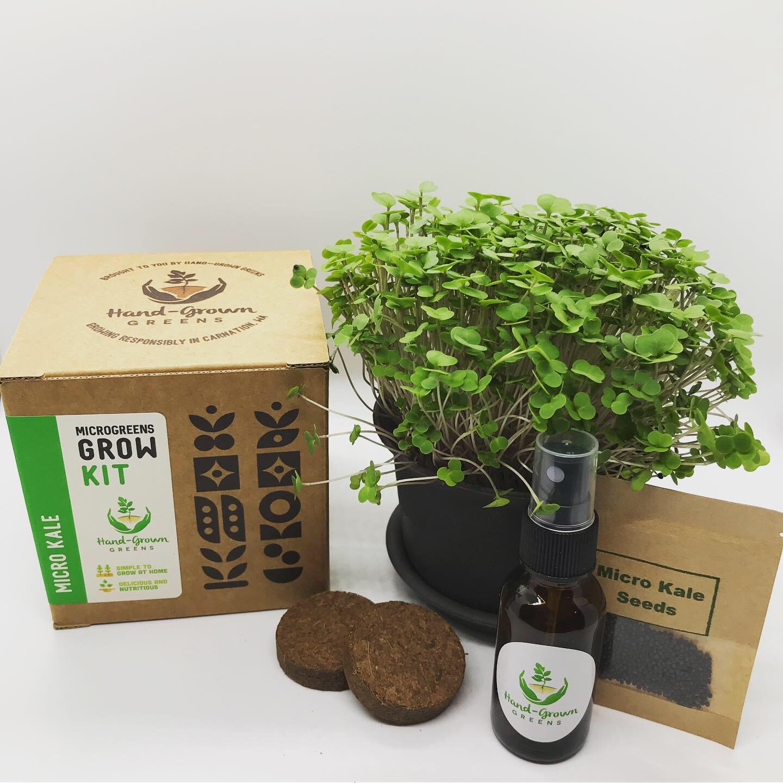 Micro kale growing kit