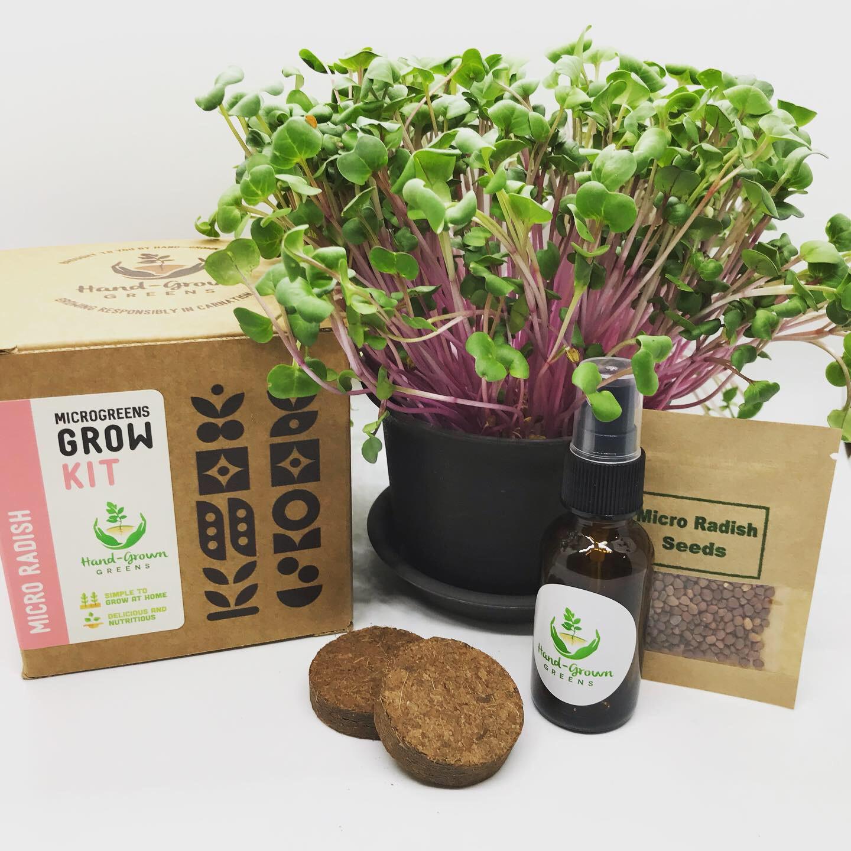 Micro radish growing kit