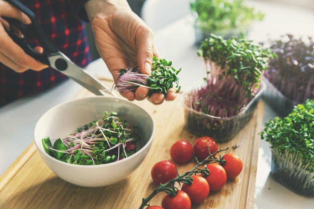 microgreens on kitchen counter
