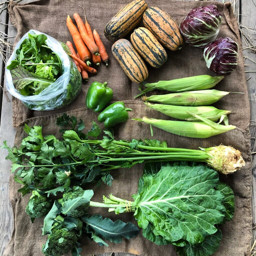 Beautiful vegetables from a local CSA farm