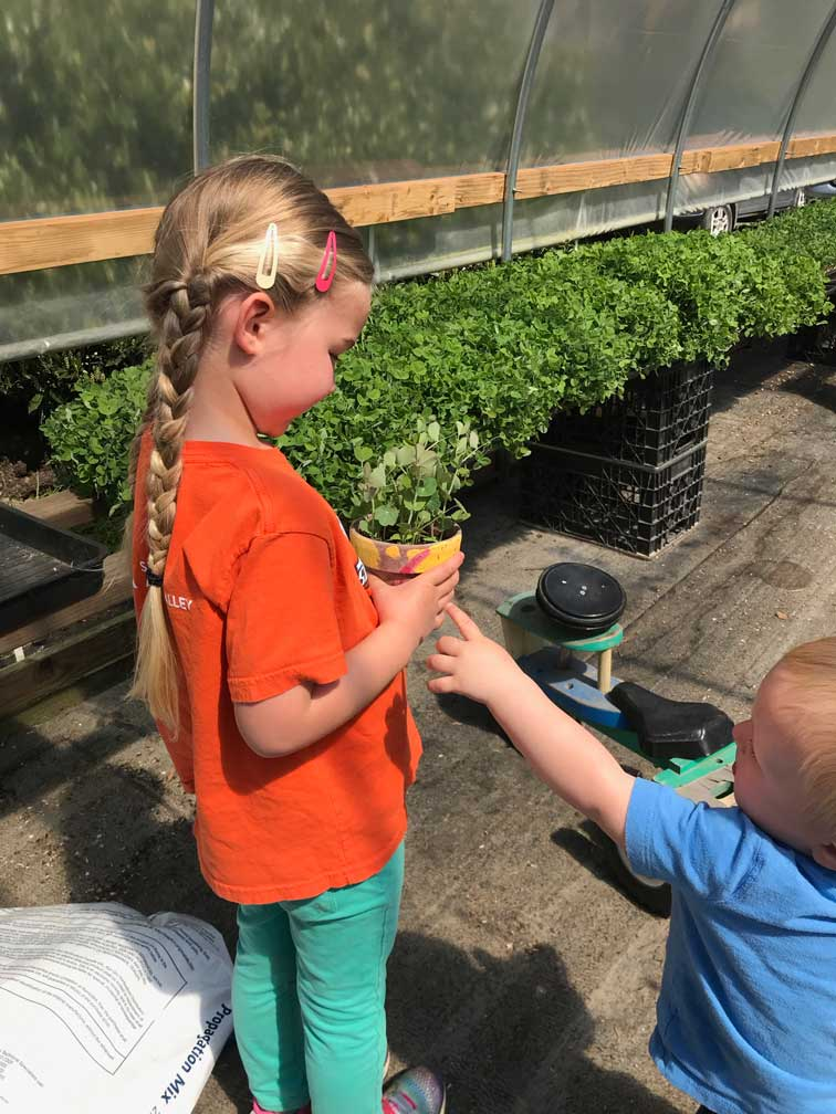 Children growing microgreens in greenhouse
