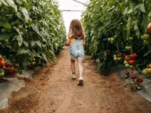 young girl in tomato rows