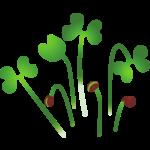 microgreens icon
