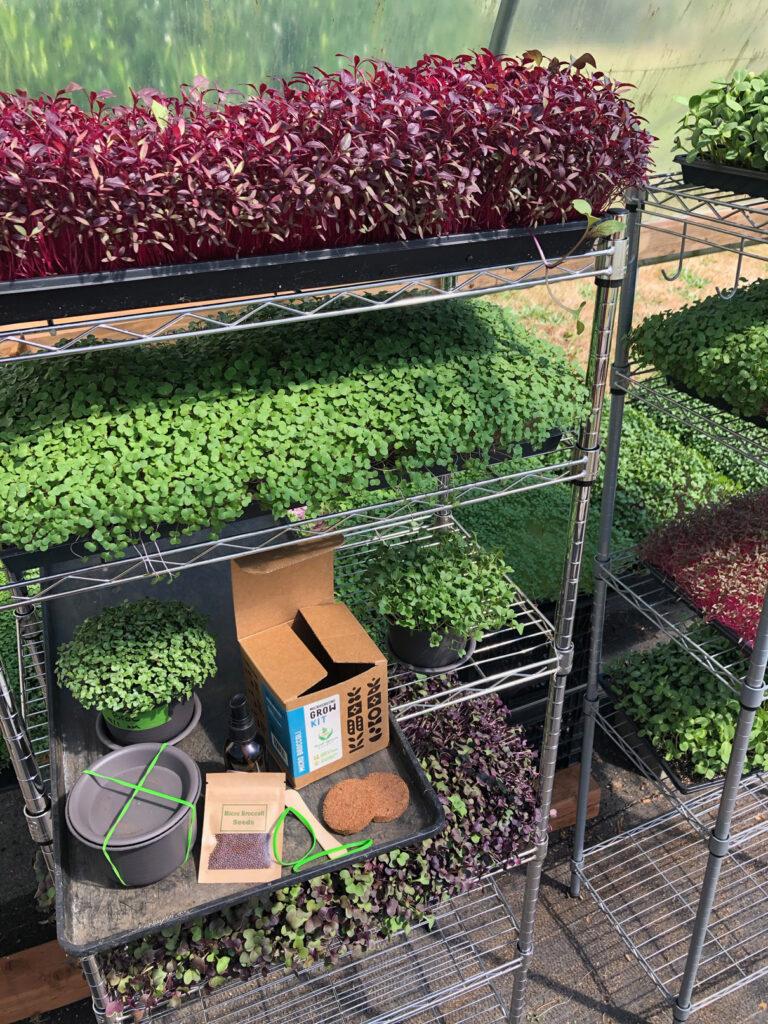 microgreen selection in greenhosue