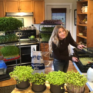 growing microgreens in a kitchen